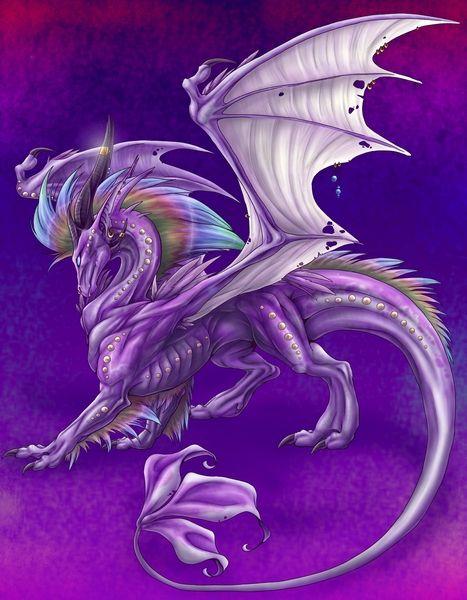 Dragon violet